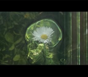 Photography on glass, oac base : x-ray photograph in front of a daisy • 9x16cm • GALLERY PHOTOGRAPHY